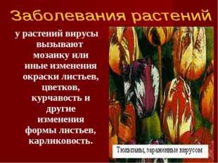 у растений вирусы вызывают мозаику или иные изменения окраски листьев, цветко
