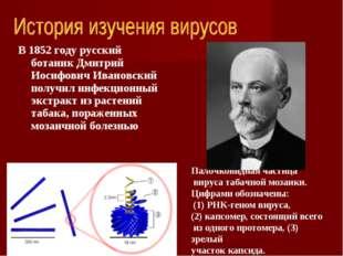 В 1852 году русский ботаник Дмитрий Иосифович Ивановский получил инфекционный