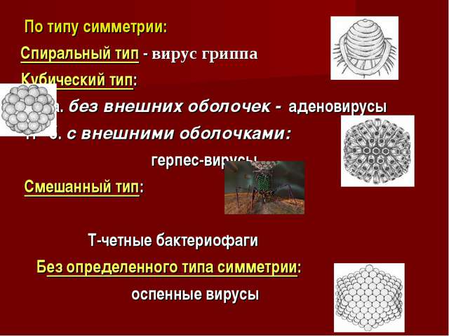 По типу симметрии: Спиральный тип - вирус гриппа Кубический тип: а. без внеш...