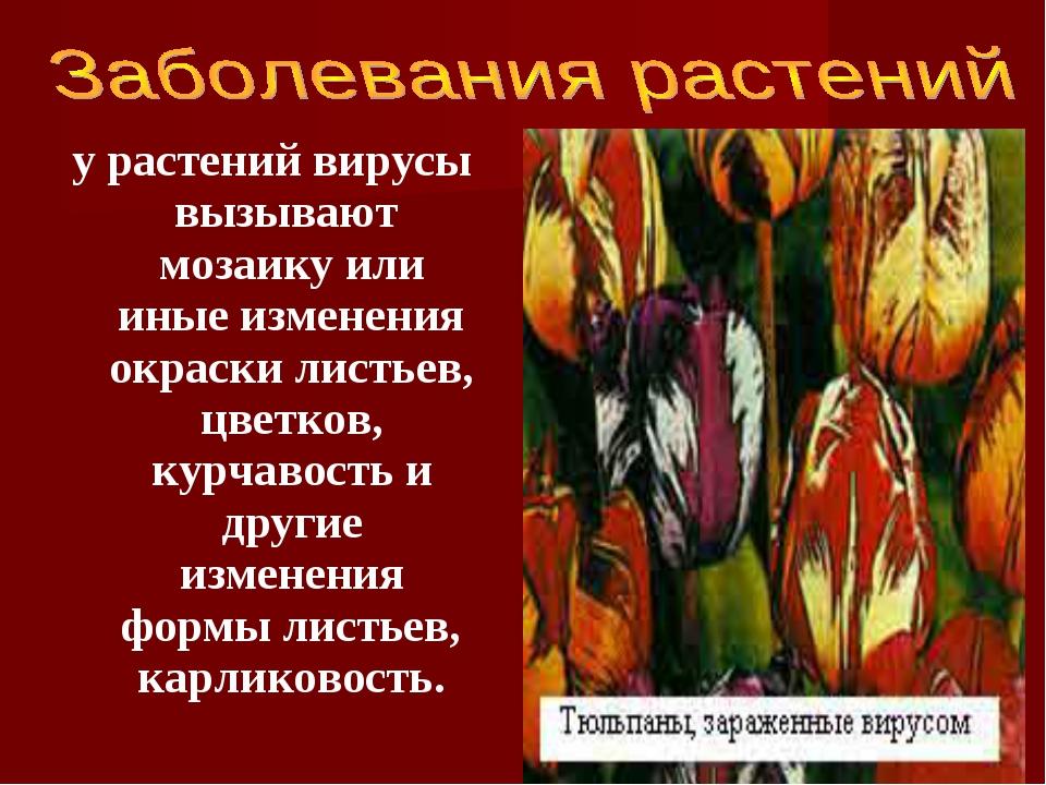 у растений вирусы вызывают мозаику или иные изменения окраски листьев, цветко...