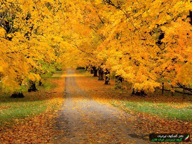 Обои для рабочего стола Autumn Covered Road