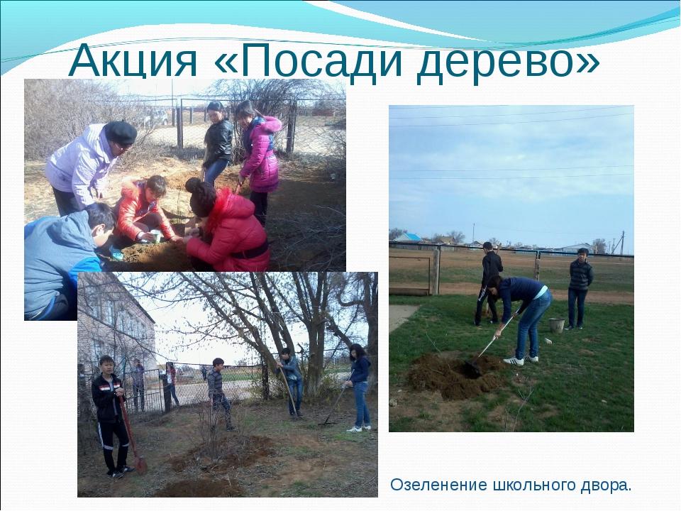Акция «Посади дерево» Озеленение школьного двора.
