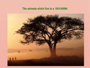 The animals which live in a SAVANNA