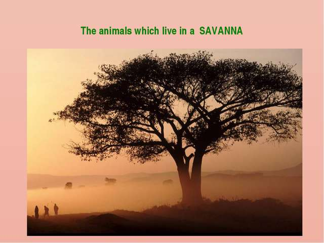 The animals which live in a SAVANNA