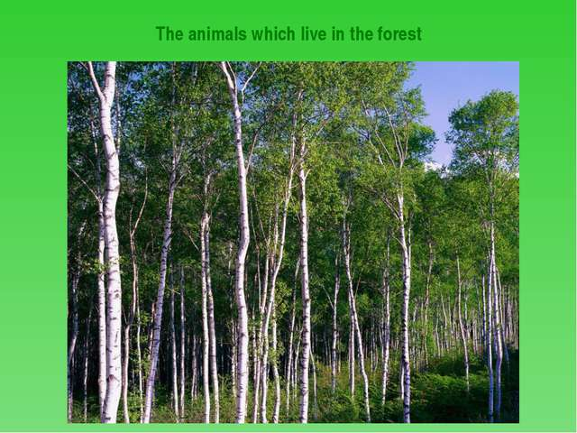 The animals which live in the forest