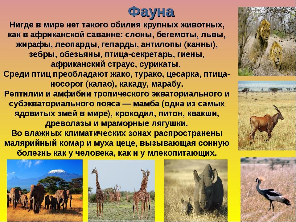 Реферат на тему африка животные 5979