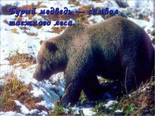 Бурый медведь — символ таежного леса.