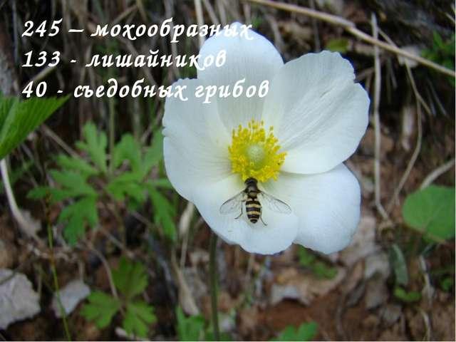 245 – мохообразных 133 - лишайников 40 - съедобных грибов