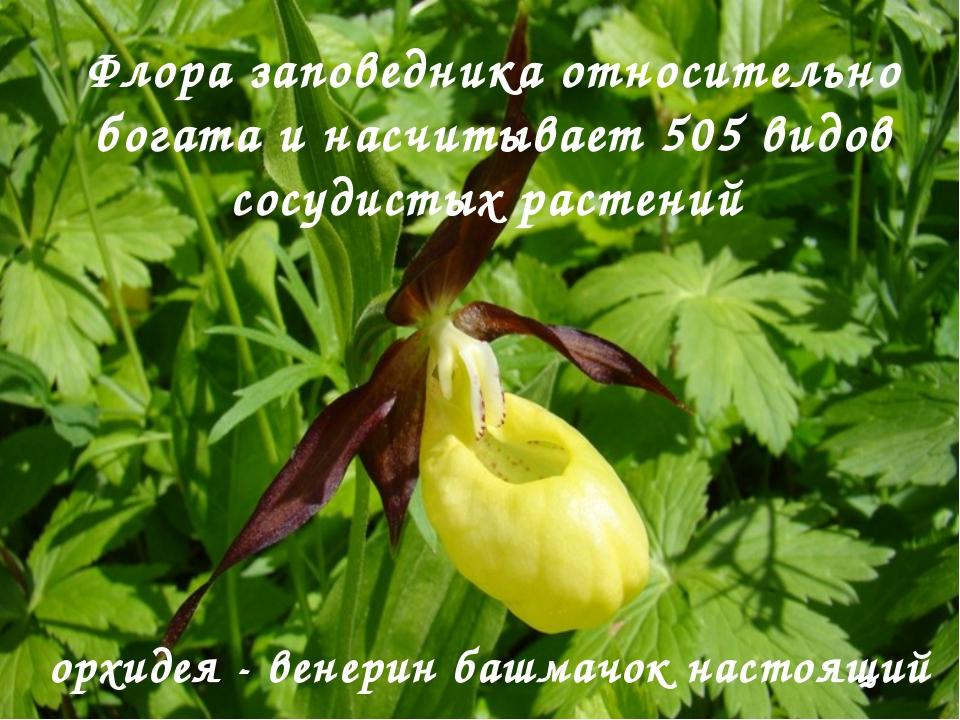 Флора заповедника относительно богата и насчитывает 505 видов сосудистых раст...