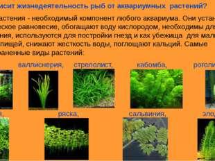 6.Как зависит жизнедеятельность рыб от аквариумных растений? Водные растения