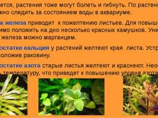 Оказывается, растения тоже могут болеть и гибнуть. По растениям тоже можно сл