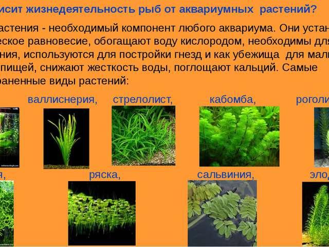 6.Как зависит жизнедеятельность рыб от аквариумных растений? Водные растения...