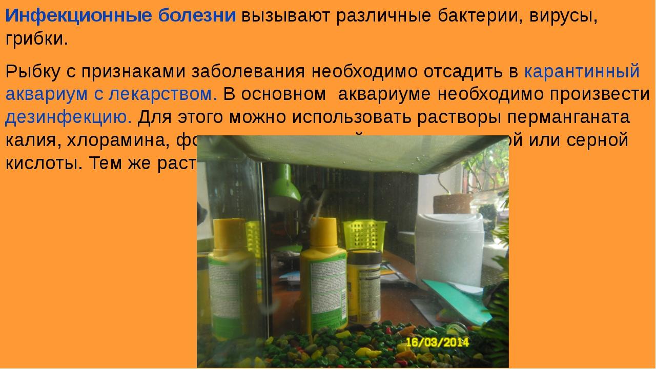 Инфекционные болезни вызывают различные бактерии, вирусы, грибки. Рыбку с при...