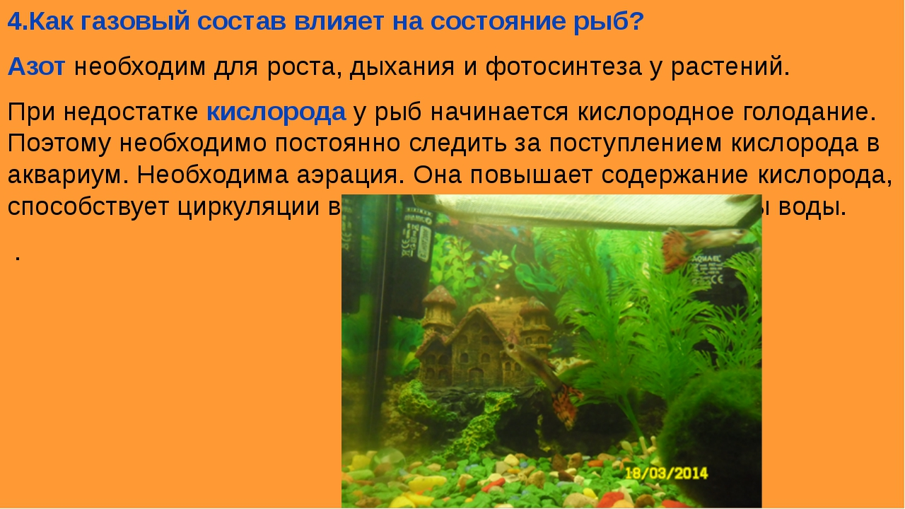 4.Как газовый состав влияет на состояние рыб? Азот необходим для роста, дыхан...
