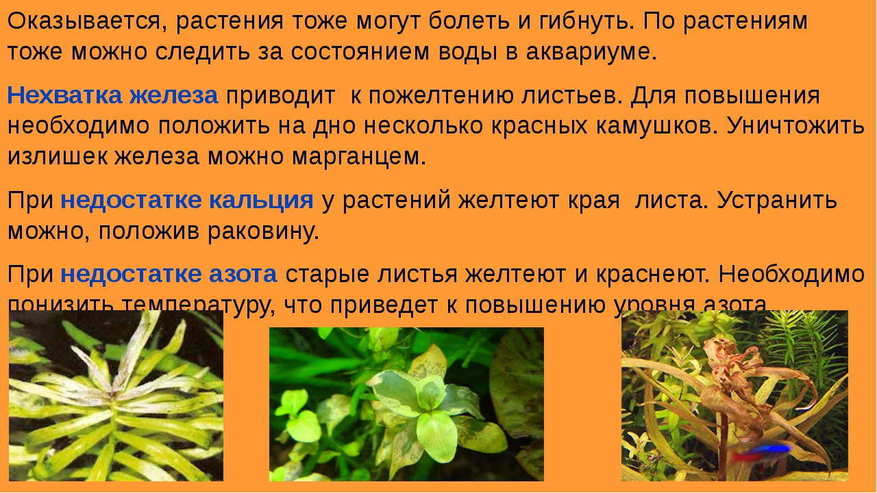 Оказывается, растения тоже могут болеть и гибнуть. По растениям тоже можно сл...