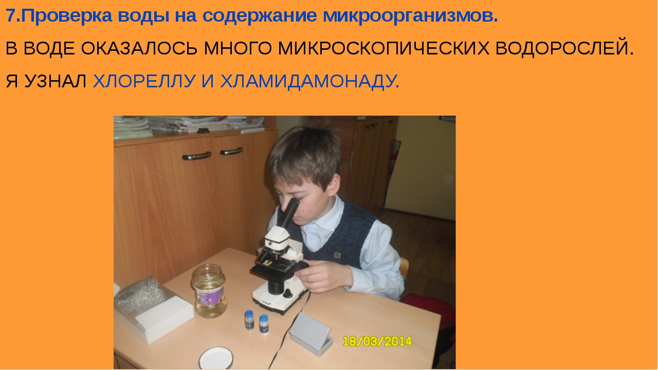 7.Проверка воды на содержание микроорганизмов. В ВОДЕ ОКАЗАЛОСЬ МНОГО МИКРОСК...
