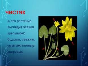 А это растение выглядит этаким крепышом: бодрым, свежим, умытым, полным здоро