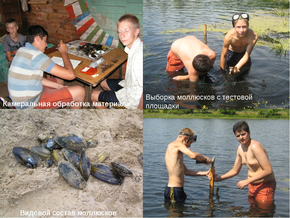Рекогносцировочное обследование Выборка моллюсков с тестовой площадки Камерал...