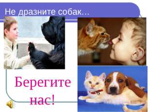 Не дразните собак… Берегите нас!