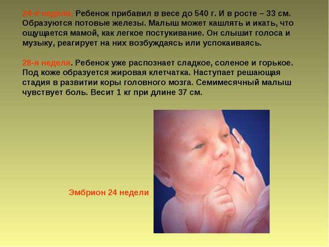 24-я неделя. Ребенок прибавил в весе до 540 г. И в росте – 33 см. Образуются...