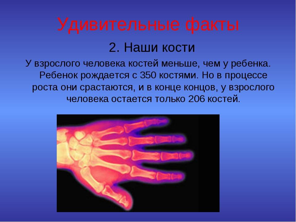 Удивительные факты 2.Наши кости У взрослого человека костей меньше, чем у ре...