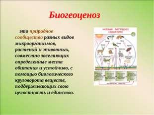 Биогеоценоз это природное сообщество разных видов микроорганизмов, растений и