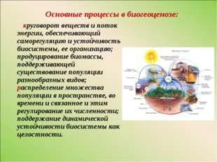 Основные процессы в биогеоценозе: круговорот веществ и поток энергии, обеспеч