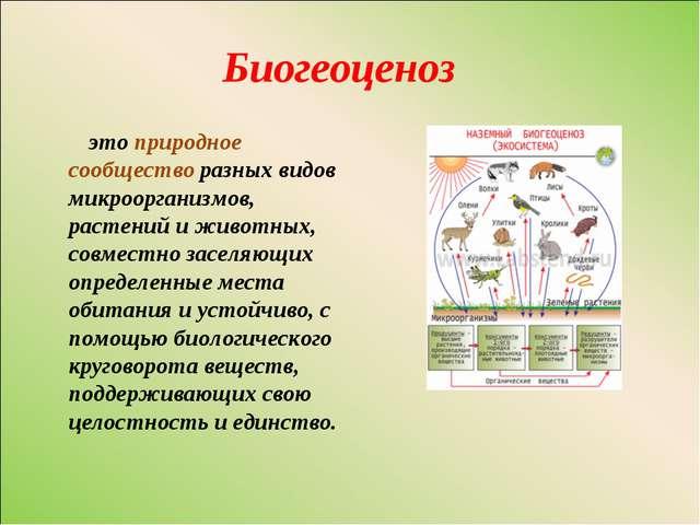Биогеоценоз это природное сообщество разных видов микроорганизмов, растений и...
