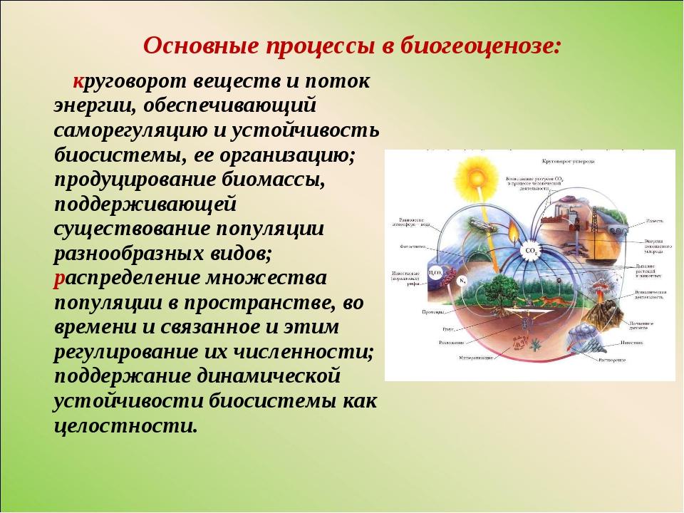 Основные процессы в биогеоценозе: круговорот веществ и поток энергии, обеспеч...