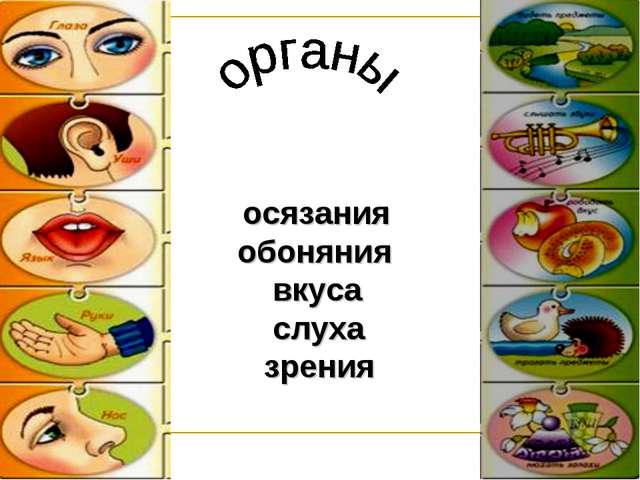 осязания обоняния вкуса слуха зрения