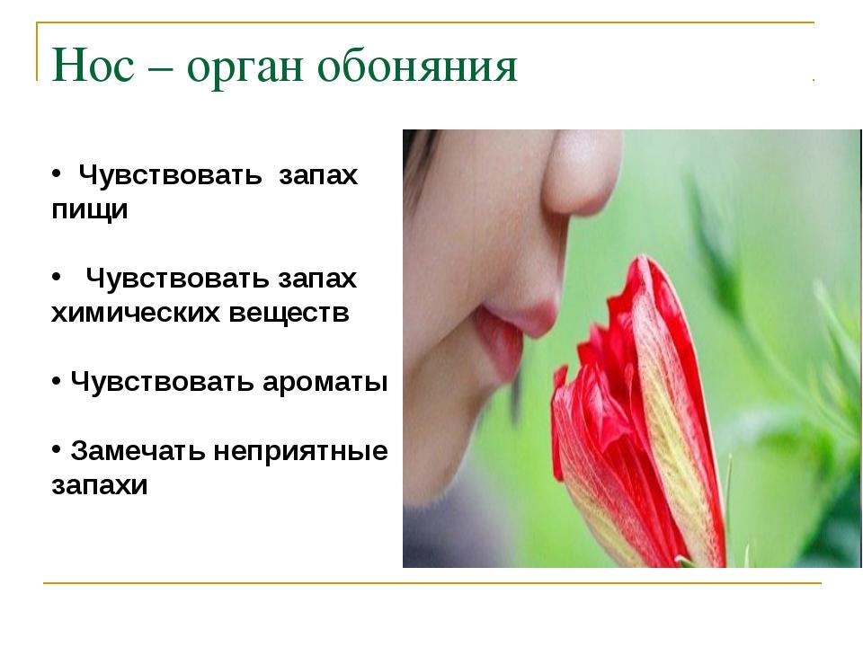 Нос – орган обоняния Чувствовать запах пищи Чувствовать запах химических веще...