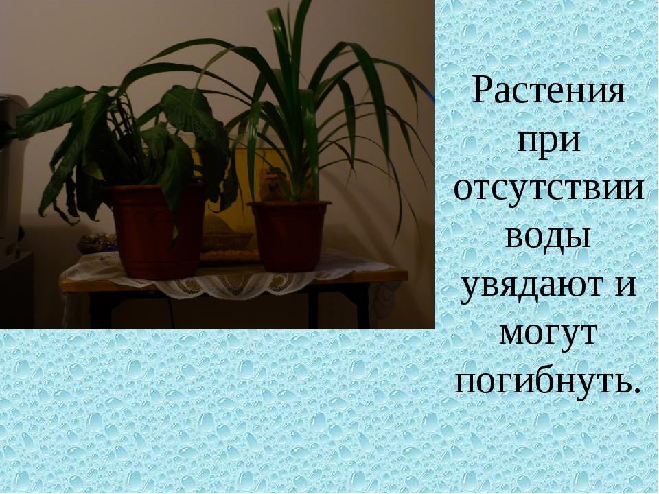 Растения при отсутствии воды увядают и могут погибнуть.
