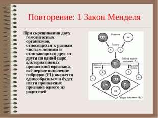 Повторение: 1 Закон Менделя При скрещивании двух гомозиготных организмов, отн