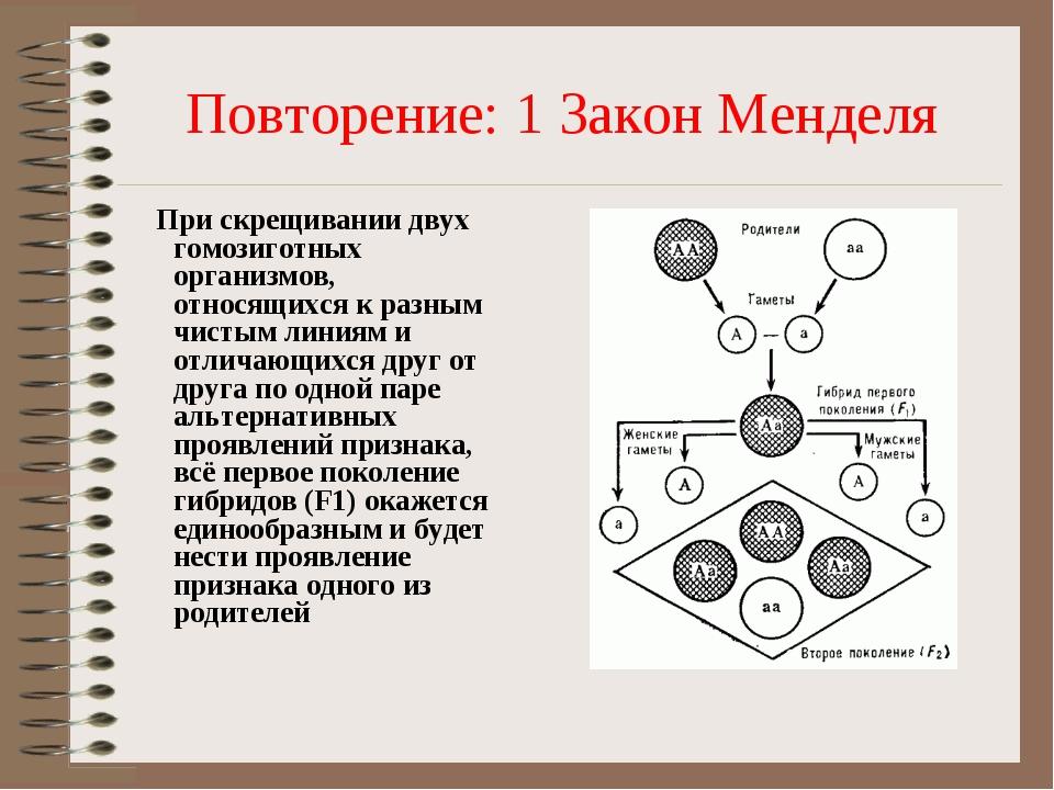 Повторение: 1 Закон Менделя При скрещивании двух гомозиготных организмов, отн...