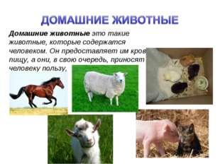 Домашние животные это такие животные, которые содержатся человеком. Он предос