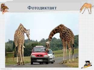 Фотодиктант FokinaLida.75@mail.ru