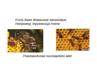 Пчеловодство поставляло мёд. Есть даже домашние насекомые. Например, тружениц