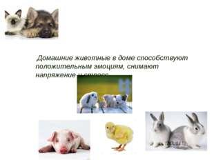 Домашние животные в доме способствуют положительным эмоциям, снимают напряже