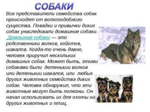 Все представители семейства собак происходят от волкоподобного существа. Пов