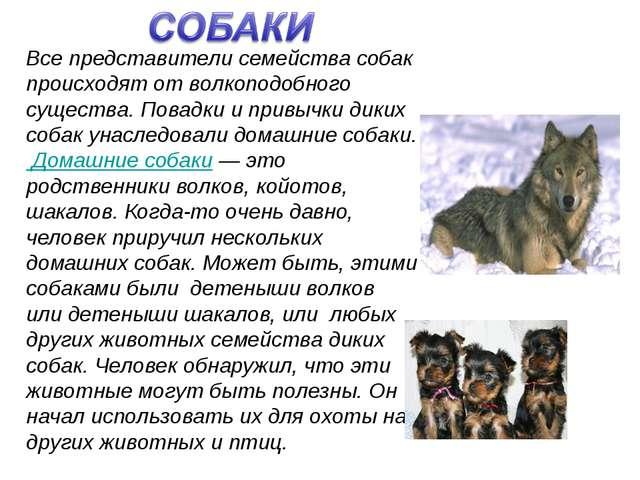 Все представители семейства собак происходят от волкоподобного существа. Пов...