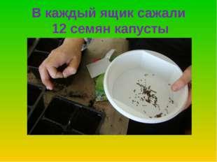 В каждый ящик сажали 12 семян капусты