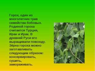 Горох, один из многолетних трав семейства бобовых. Родиной гороха считается
