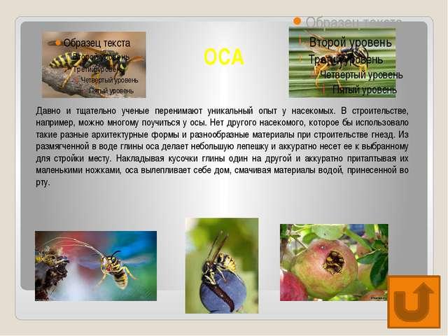ОСА Давно и тщательно ученые перенимают уникальный опыт у насекомых. В строит...