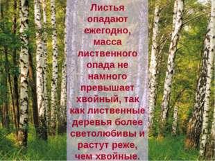 Листья опадают ежегодно, масса лиственного опада не намного превышает хвойный