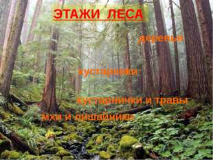 ЭТАЖИ ЛЕСА деревья кустарники кустарнички и травы мхи и лишайники