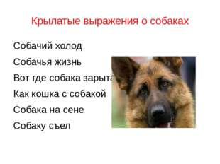 Крылатые выражения о собаках Собачий холод Собачья жизнь Вот где собака зарыт