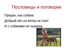Пословицы и поговорки Предан, как собака Добрый пёс на ветер не лает И с соба