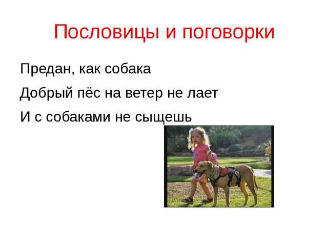 Пословицы и поговорки Предан, как собака Добрый пёс на ветер не лает И с соба...