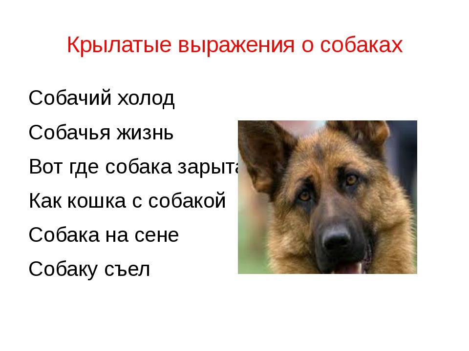 Крылатые выражения о собаках Собачий холод Собачья жизнь Вот где собака зарыт...