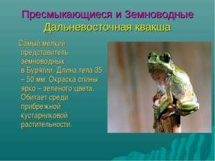 Пресмыкающиеся и Земноводные Дальневосточная квакша Самый мелкий представител